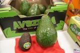 Avocado Rezepte groß Fruit Logistica Berlin Messe Riesenavocado