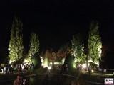 Baeume Wald Licht Nebel Botanische Nacht Illumination Berlin Dahlem Botanischer Garten Steglitz Zehlendorf