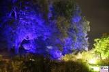 Beleuchtung Baumgruppe Botanische Nacht Botanischer Garten Museum Sommernacht Berlin Dahlem Steglitz karibische Sommernacht Berichterstatter