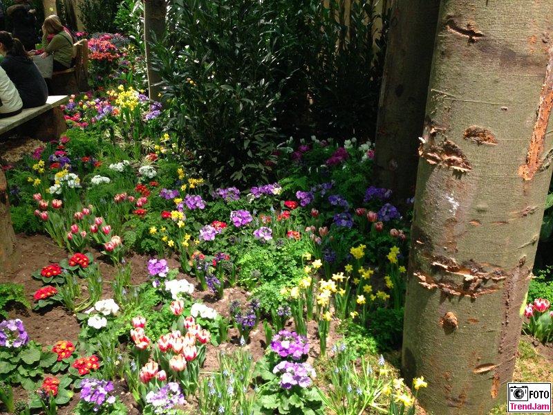Fruehling Spring Blumenhalle Gruene Woche Berlin 2015