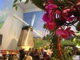 Gruene Woche 2016 Holland Halle Windmuehle Blumen Berlin Messe @visitberlin