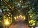 Laubengang Gaeste Besucher Schloessernacht Sanssouci Potsdam Rokoko Linden Berichterstatter