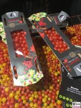 Mini Tomaten TOMBERRY® Frucht Fruit Logistica Messe Gelaende Berlin unter dem Funkturm Berichterstatter