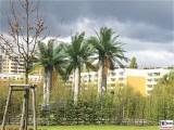 Palmen Plastik IGA Internationale Garten Ausstellung Berlin Marzahn Hellersdorf Berichterstatter Trendjam