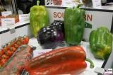 Paprika Rezepte Riesenfrucht Fruit Logistica Berlin Messe groß