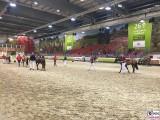 Pferde hippologica Tiere Gruene Woche Berlin Messe Funkturm TrendJam PresseFoto