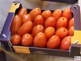 Riesen Flaschen Tomaten FRUIT LOGISITICA Messe Berlin Funkturm