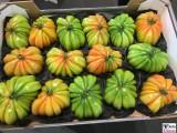 Riesen Tomaten gruene Frucht Fruit Logistica Messe Gelaende Berlin unter dem Funkturm Berichterstatter