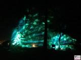 Wald Licht Nebel Botanische Nacht Illumination Berlin Dahlem Botanischer Garten Steglitz Zehlendorf