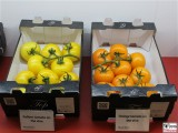 gelbe orange Tomaten FRUIT LOGISITICA Messe Berlin Funkturm