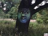 sprechender Baum Eiche Animation Botanische Nacht Berlin Dahlem Botanischer Garten Magische Natur Welten Berichterstatter